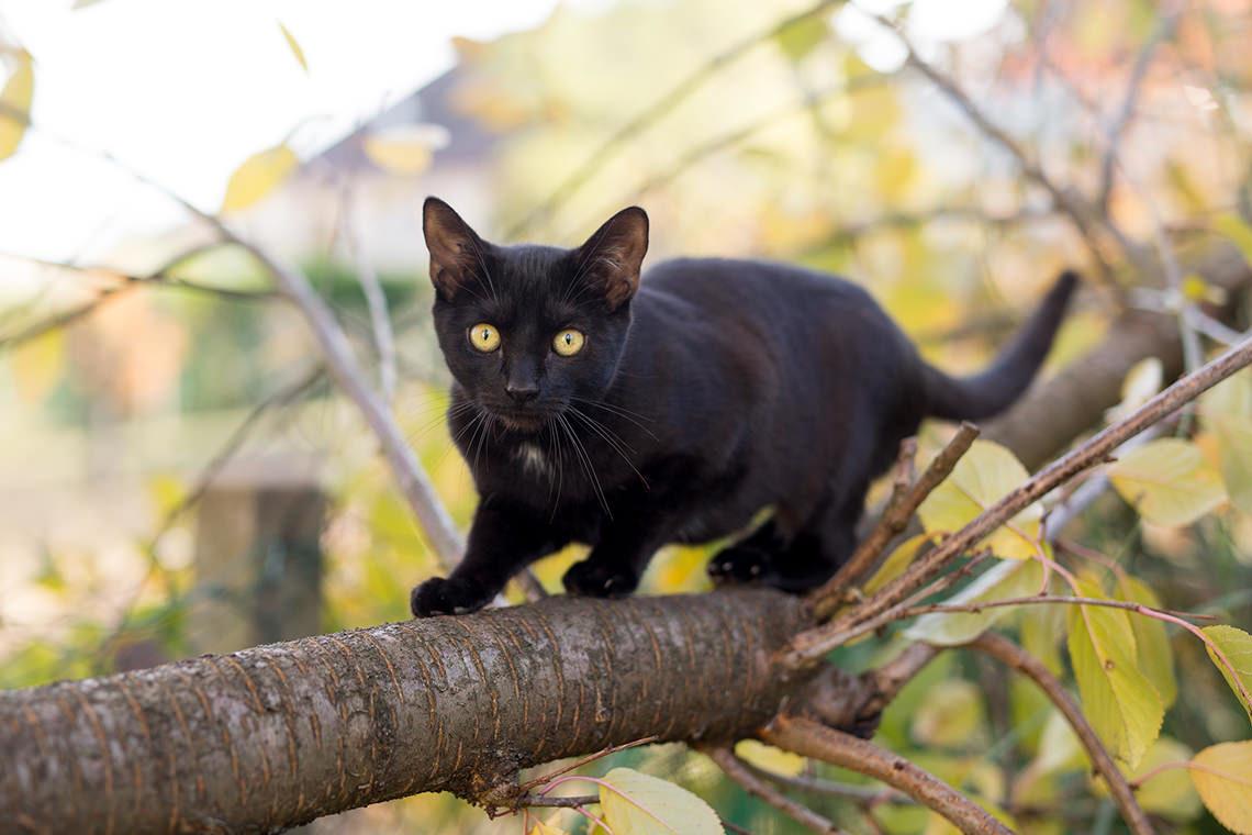 photo chaton noir